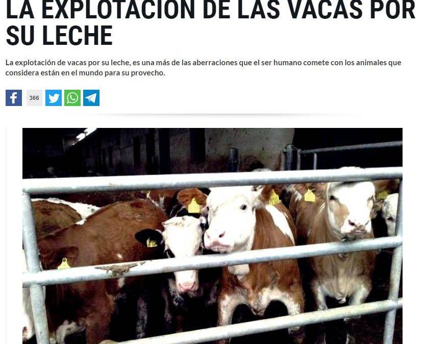 """""""TODXS ESTXS QUE SALTAN PORQUE 'OH BRAD DEFIENDE LA TORTURA DE ESTOS ANIMALITOS EN LA TAUROMAQUIA', QUIERO CREER QUE NO TOMAN LECHE DE VACA"""""""